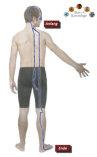 Der Blasenmeridian hat die Funktion, die zur Ausscheidung bestimmte Flüssigkeit zu sammeln.