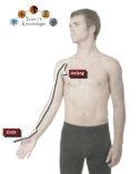Die Lunge dient primär zur Atmung und zum Gasaustausch (Sauerstoff - Kohlendioxid).