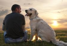 Da MSM keine bekannten Nebenwirkungen hat, wird es im Allgemeinen sehr gut von den Tieren vertragen.